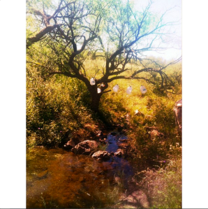 tree meg
